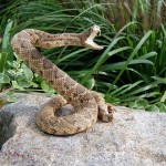 ophidiophobia - the fear of snakes