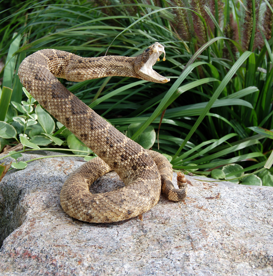 ophidiophobia meet snakes in florida