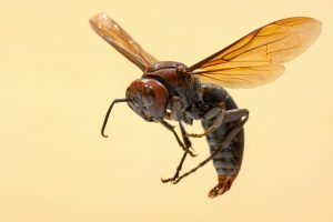 Apiphobia and Spheksophobia - Fear Of Wasps And Bees